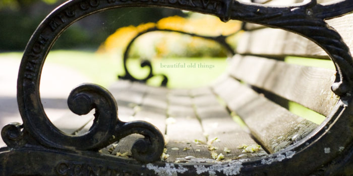 Park Bench // Personal | Wellesley Lifestyle Photographer