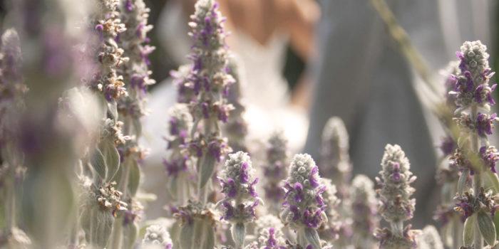 Win a Wedding Photography Package! // Boston Wedding Photographer