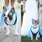 blog_puppyatawedding_stephanieritaphoto_0033