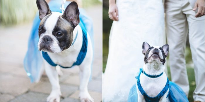 The Wedding Pup // One Frame | Maine Barn Wedding