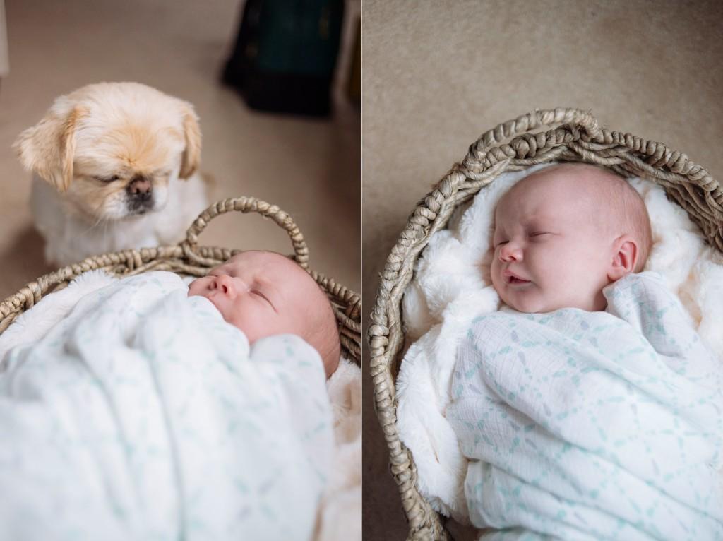 Boston Newborn Photography Stephanie Rita Photo_0045